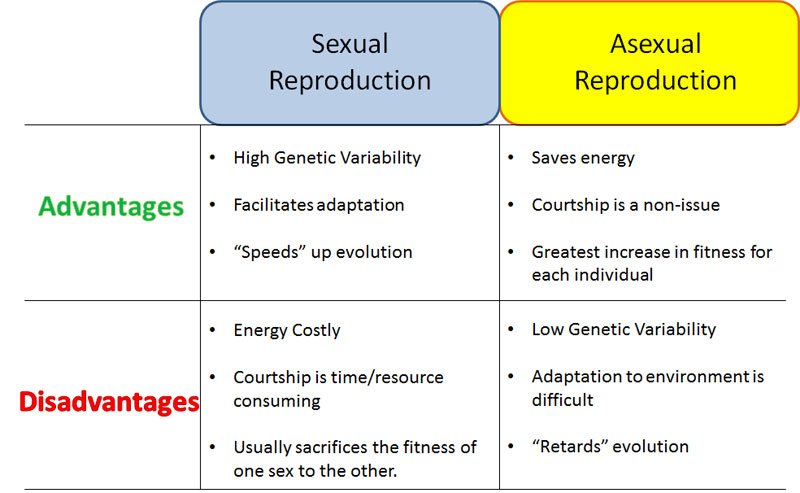 Difference between asexual and sexual reproduction offspring gone